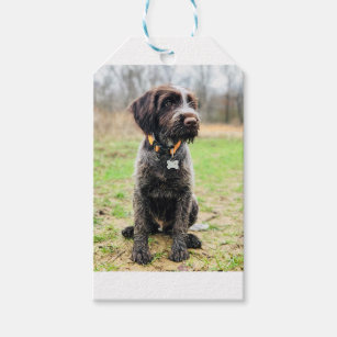 Wirehaired Pointing Griffon Gifts on Zazzle CA