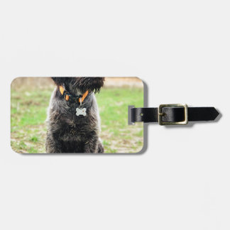 Wirehaired pointing Griffon puppy Luggage Tag