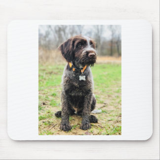 Wirehaired pointing Griffon puppy Mouse Pad