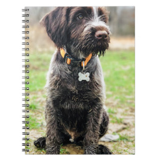 Wirehaired pointing Griffon puppy Notebooks