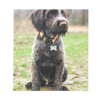 Wirehaired pointing Griffon puppy Notepad