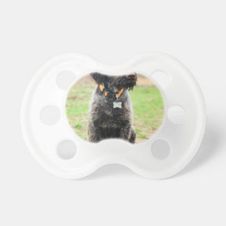 Wirehaired pointing Griffon puppy Pacifier