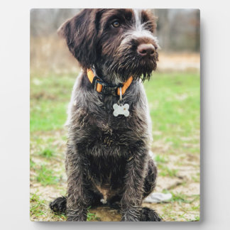 Wirehaired pointing Griffon puppy Plaque
