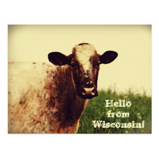 Wisconsin Cow Photo Postcard