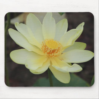 Wisconsin Water Lily Mouse Pad Design #2