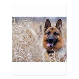 Wise German Shepherd Puppy Postcard