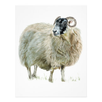 Wise Mother Sheep Letterhead