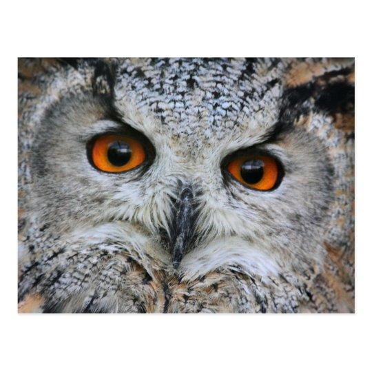 Wise Owl Postcard