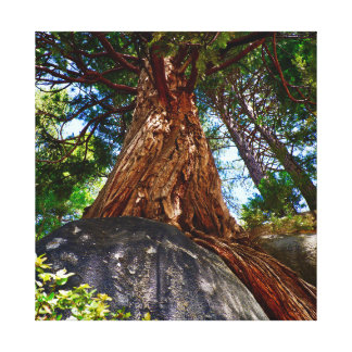 Wise Tree Canvas Print