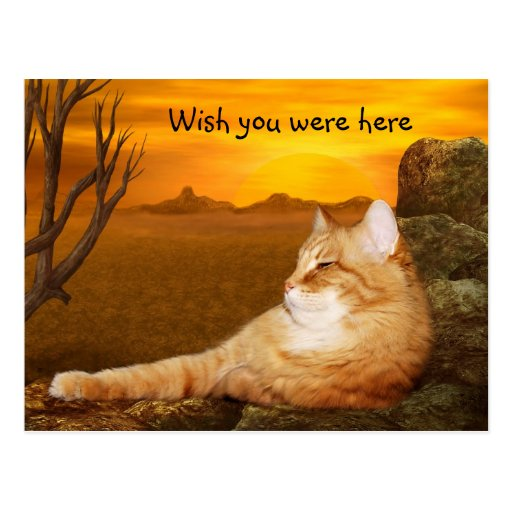 Wish you were here kitty post card