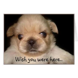 Wish you were here pekingese puppy greeting card