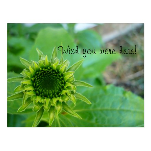 Wish you were here! postcard
