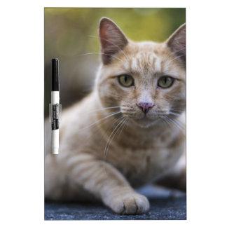Wishful Beige Tabby Cat Dry Erase Board