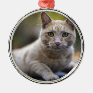 Wishful Beige Tabby Cat Silver-Colored Round Ornament