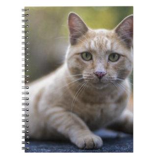 Wishful Beige Tabby Cat Spiral Notebooks