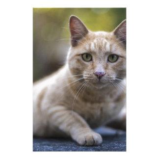 Wishful Beige Tabby Cat Stationery
