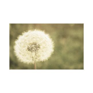 wishing flower aged5 canvas print