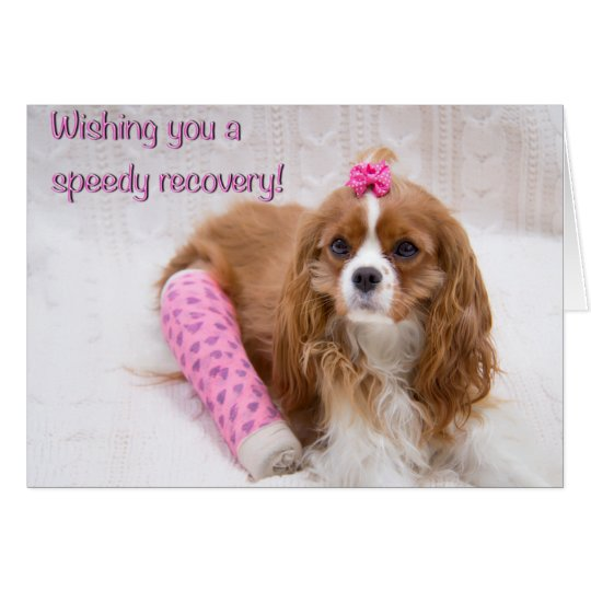 Wishing You A Speedy Recovery Spaniel Card