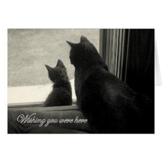Wishing You Were Here, Kitties Greeting Card