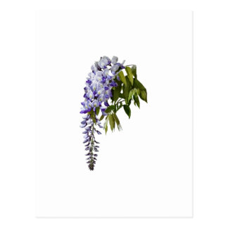 Wisteria and Leaves Postcard
