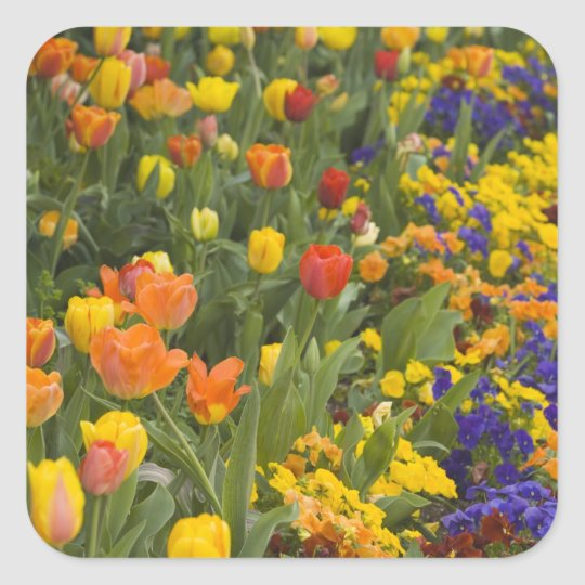 Wisteria and tulips in garden of Dumbarton Square Sticker