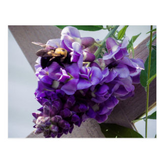 Wisteria & Bee Postcard