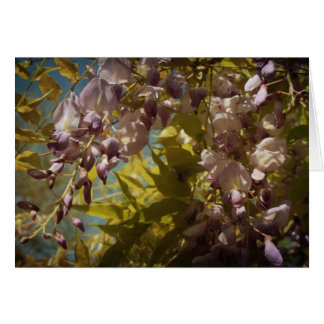 Wisteria Blooms in the Spring Sunshine Card