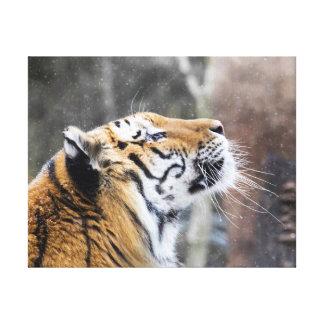 Wistful Winter Tiger Canvas Print
