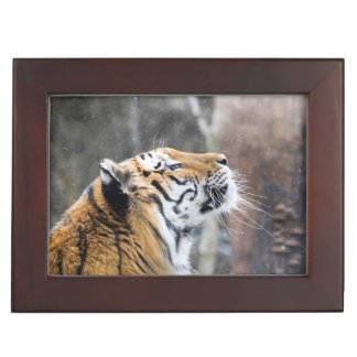 Wistful Winter Tiger Keepsake Box