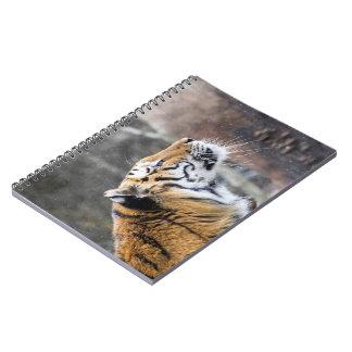 Wistful Winter Tiger Notebook