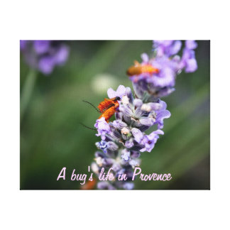 With bug' S life in Provence Canvas Print
