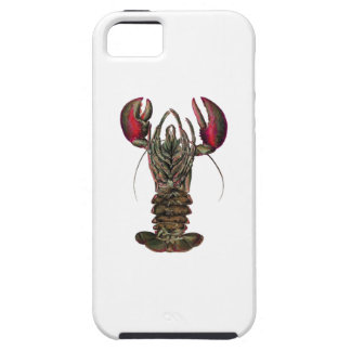 WITHIN ITS REACH iPhone 5 COVER