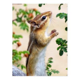 Within Reach - Chipmunk Postcard