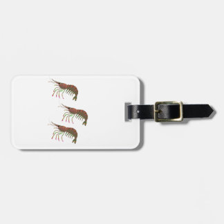 WITHIN THE BAY LUGGAGE TAG