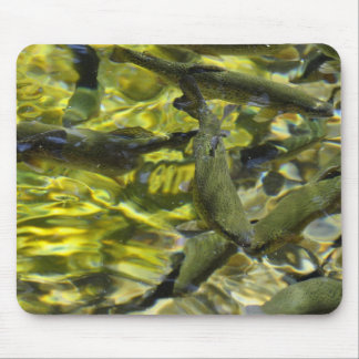 Wizard Falls Fish Hatchery Mouse Pad