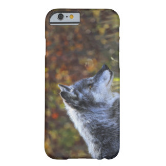Wolf (Canis Lupus) Barely There iPhone 6 Case