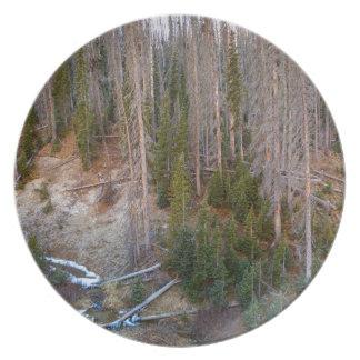 Wolf Creek Pass Forest Landscape Plate