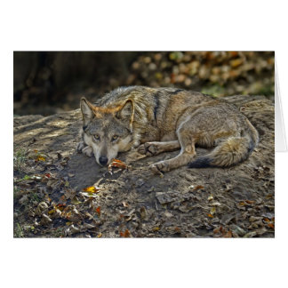 Wolf Dare Card