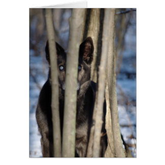 Wolf Dog Thank You Notecards Card