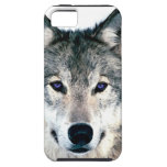 Wolf Eyes in woods wild nature animal Print Case For The iPhone 5