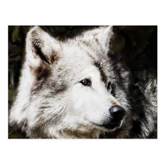 wolf head study postcard