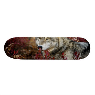 Wolf in red foliage skate board deck