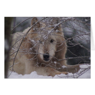 Wolf in Snow Card