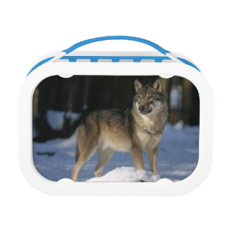 Wolf Lunch Box