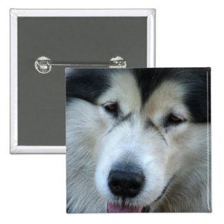 Wolf Malamute Picture Square Pin