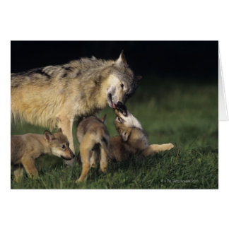 Wolf mother with young pups card