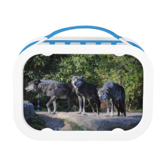 Wolf Pack Lunch Box