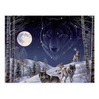 Wolf Pack Postcard