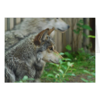 Wolf Pair  Greeting Cards