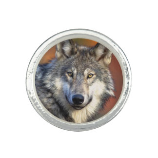 Wolf Photograph Photo Ring